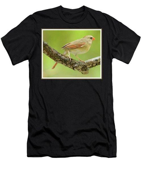 Juvenile, Female Cardinal, Animal Portrait Men's T-Shirt (Athletic Fit)