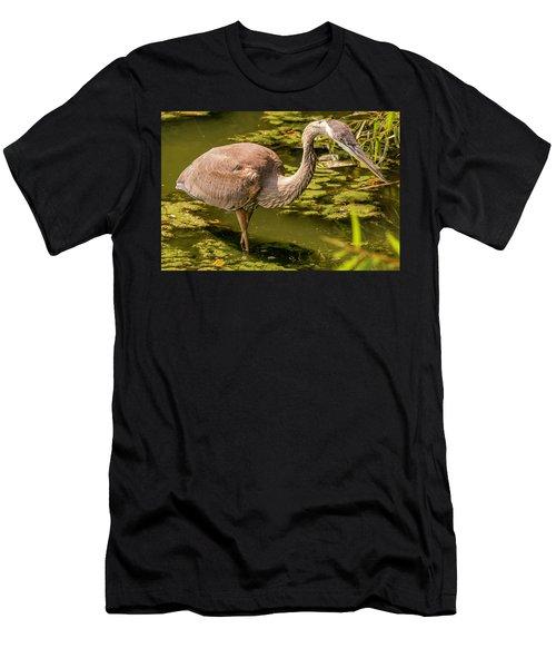 Juvenile Great Blue Heron Men's T-Shirt (Athletic Fit)