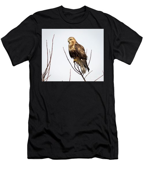 Juvenile Rough-legged Hawk  Men's T-Shirt (Athletic Fit)