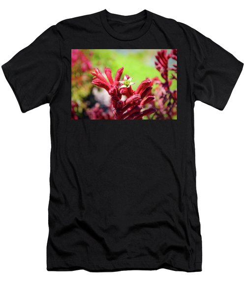 Kangaroo Paws Men's T-Shirt (Athletic Fit)