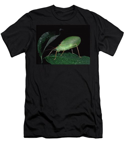 Katydid At Night Men's T-Shirt (Athletic Fit)