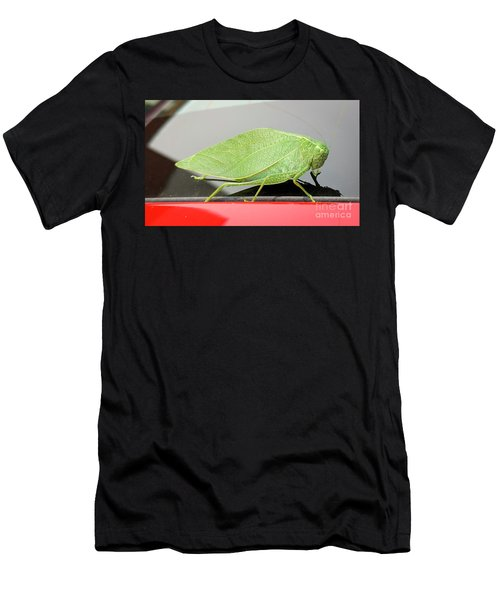 Katydids- Bush Crickets Men's T-Shirt (Athletic Fit)