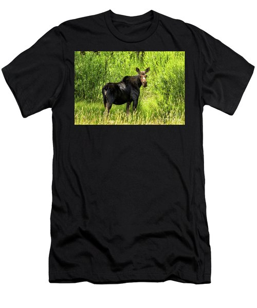 Keep Your Distance Wildlife Art By Kaylyn Franks Men's T-Shirt (Athletic Fit)