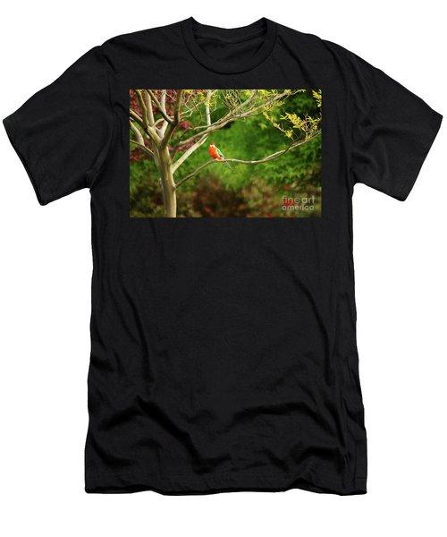 King Parrot Men's T-Shirt (Athletic Fit)