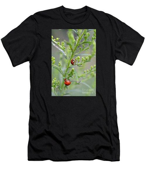 Ladybug Ladybug... Men's T-Shirt (Athletic Fit)