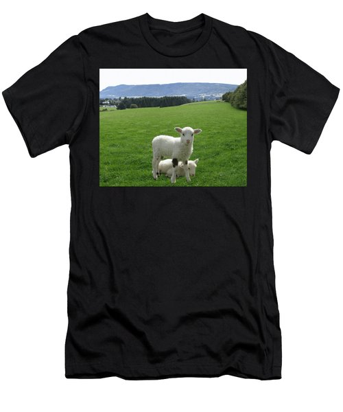 Lambs In Pasture Men's T-Shirt (Athletic Fit)