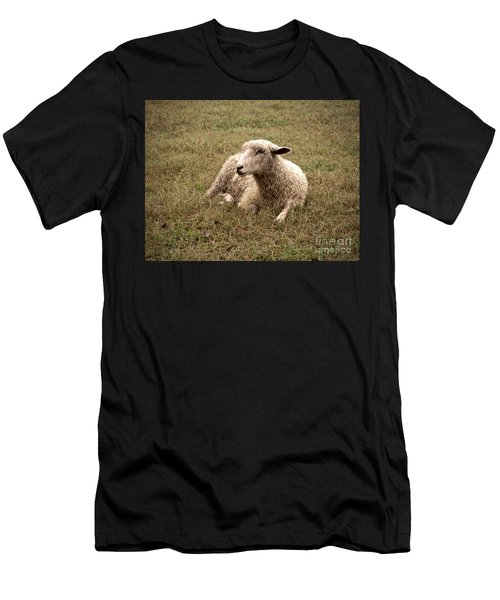 Leicester Sheep In The Dewy Grass Men's T-Shirt (Athletic Fit)