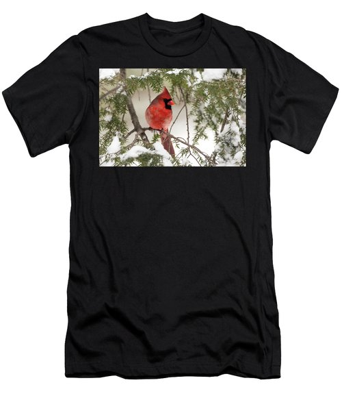 Leucistic Northern Cardinal Men's T-Shirt (Athletic Fit)