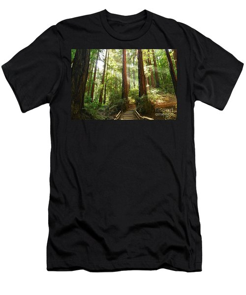 Light The Way - Redwood Forest Of Muir Woods National Monument With Sun Beam. Men's T-Shirt (Athletic Fit)