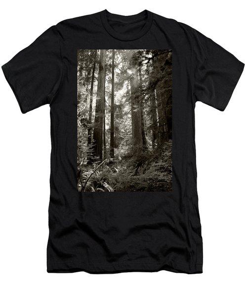 Light Through Redwoods Men's T-Shirt (Athletic Fit)