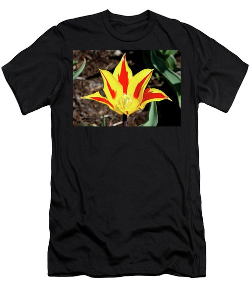 Lily Tulip Men's T-Shirt (Athletic Fit)