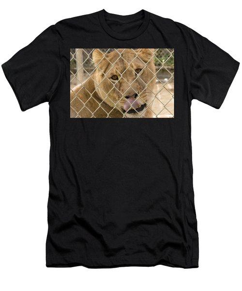 Lioness Licks Men's T-Shirt (Athletic Fit)