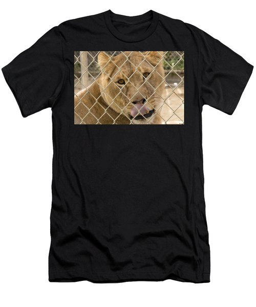 Lioness Licks Men's T-Shirt (Athletic Fit)