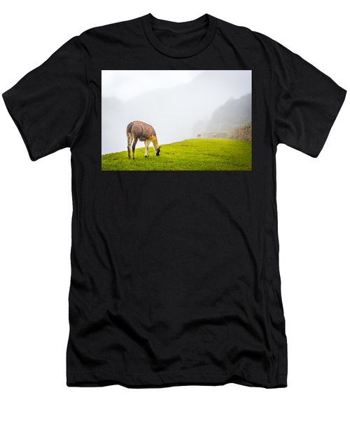 Llama  Men's T-Shirt (Athletic Fit)