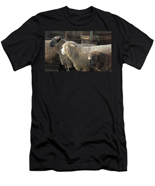 Looking For The Shepherd Men's T-Shirt (Athletic Fit)