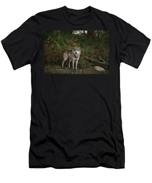 Men's T-Shirt (Slim Fit) featuring the photograph Lupine Pose by Shari Jardina