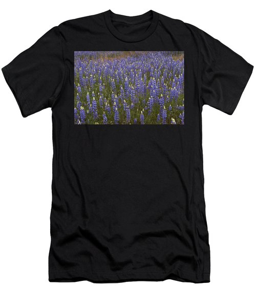 Lupines Men's T-Shirt (Athletic Fit)