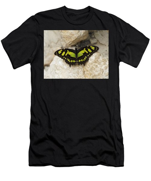 Men's T-Shirt (Athletic Fit) featuring the photograph Malachite Butterfly - Siproeta Stelenes by Paul Gulliver