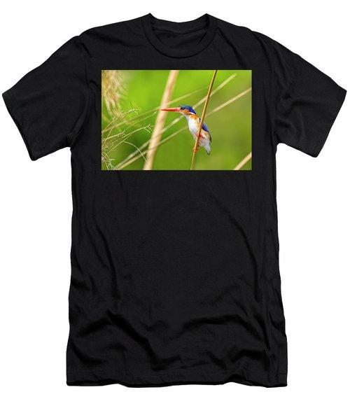 Malachite Kingfisher Men's T-Shirt (Athletic Fit)