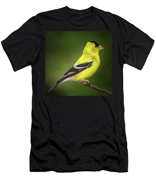 Male American Golden Finch On Twig Men's T-Shirt (Athletic Fit)