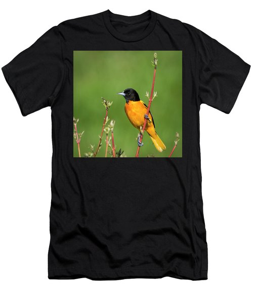 Male Baltimore Oriole Posing Men's T-Shirt (Athletic Fit)