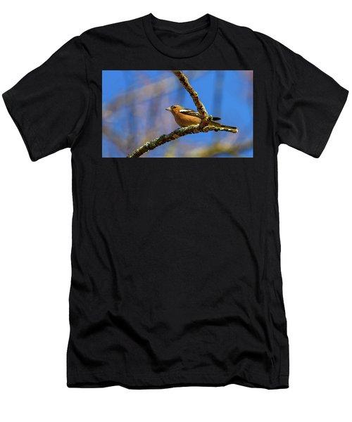 Male Common Chaffinch Bird, Fringilla Coelebs Men's T-Shirt (Athletic Fit)