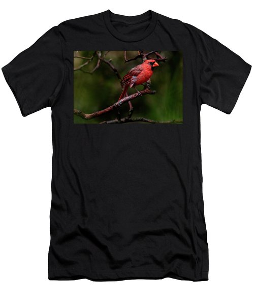 Male Northern Cardinal Men's T-Shirt (Athletic Fit)