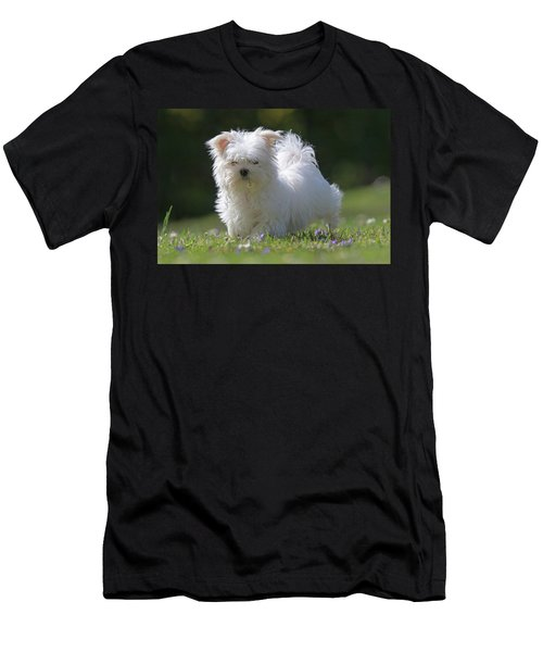 Maltese And Daisy Men's T-Shirt (Athletic Fit)