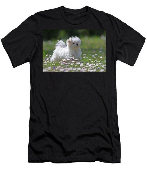 Maltese Men's T-Shirt (Athletic Fit)