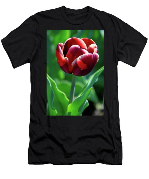 Maroon Tulip Men's T-Shirt (Athletic Fit)