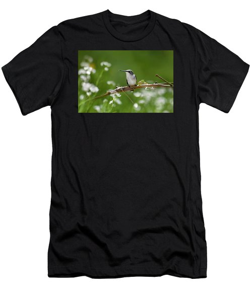 Meadow Hummingbird Men's T-Shirt (Athletic Fit)