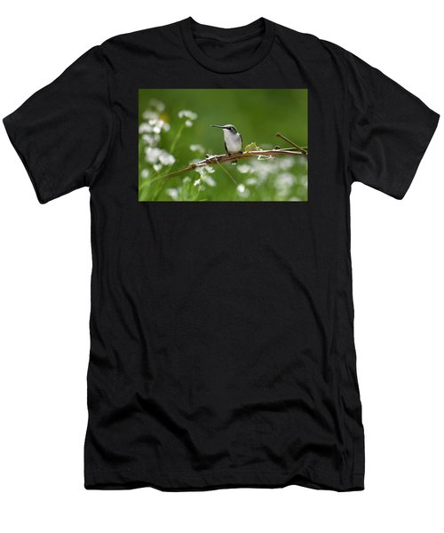Meadow Hummingbird Men's T-Shirt (Athletic Fit)