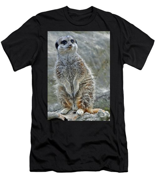 Meerkat Poses Men's T-Shirt (Athletic Fit)