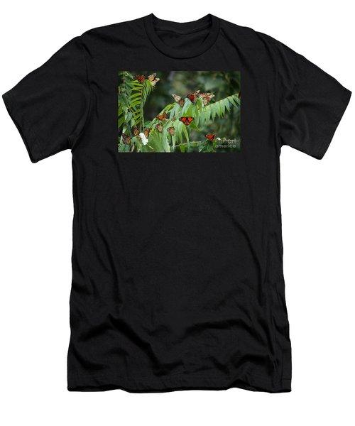 Monarch Migration Men's T-Shirt (Athletic Fit)