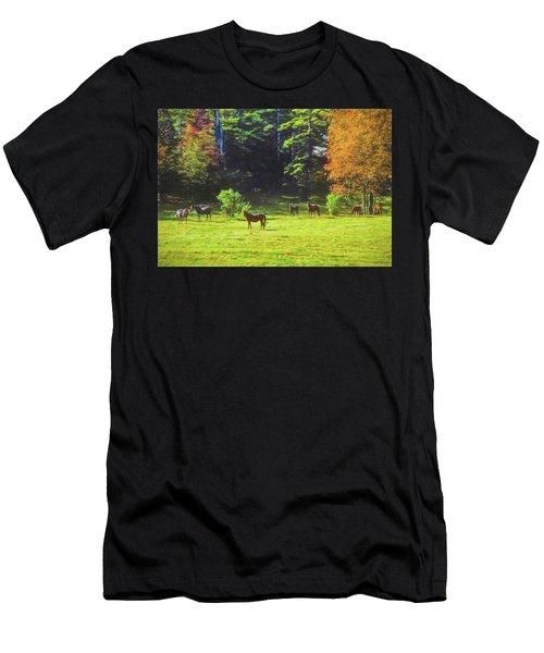 Morgan Horses In Autumn Pasture Men's T-Shirt (Athletic Fit)