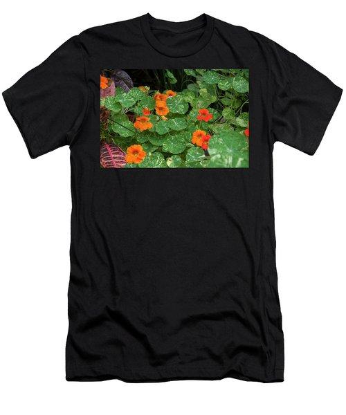 Morning In Longwood Gardens Men's T-Shirt (Athletic Fit)