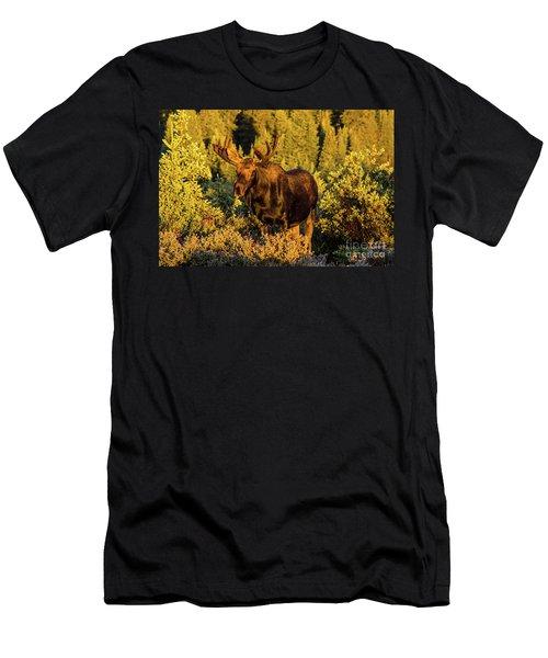 Morning Moose Men's T-Shirt (Athletic Fit)