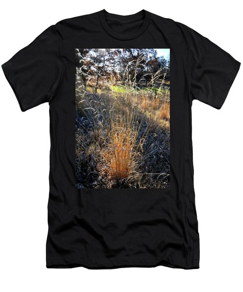 Morning Sun Backlights Fall Grasses In Glacial Park Men's T-Shirt (Athletic Fit)