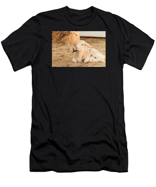Mother Sheep With Newborn Lamb Men's T-Shirt (Athletic Fit)