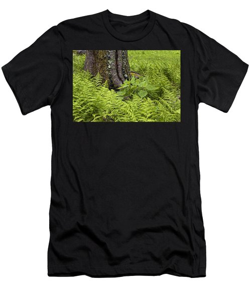 Mountain Green Ferns Men's T-Shirt (Athletic Fit)