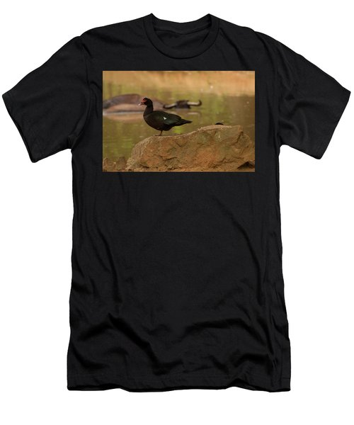 Muscovy Duck Men's T-Shirt (Athletic Fit)