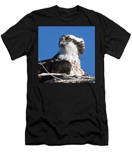 Nesting Osprey Men's T-Shirt (Athletic Fit)
