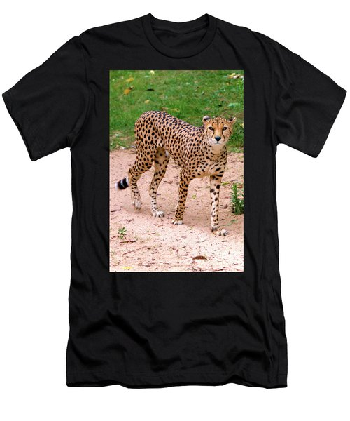 North African Cheetah Men's T-Shirt (Athletic Fit)