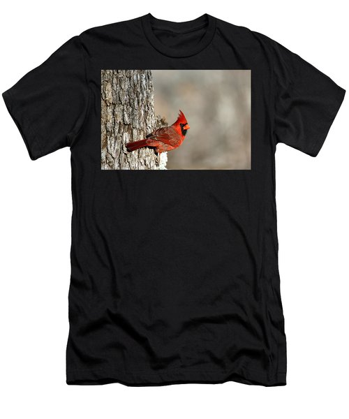 Northern Cardinal On Tree Men's T-Shirt (Athletic Fit)