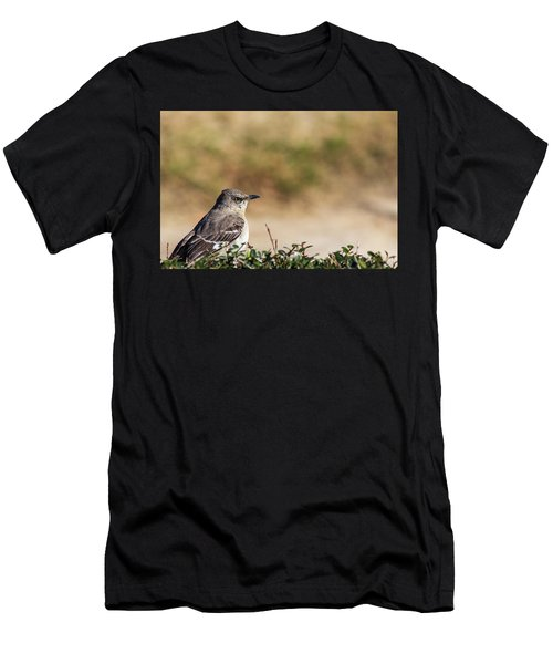 Northern Mockingbird Sitting On Top Of A Hedge Men's T-Shirt (Athletic Fit)