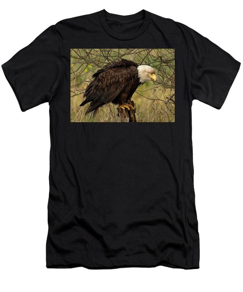 Old Eagle Men's T-Shirt (Athletic Fit)