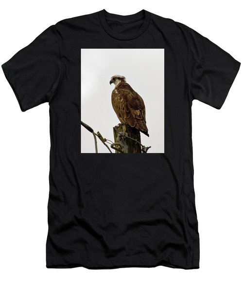 Ollie, The Osprey Men's T-Shirt (Athletic Fit)