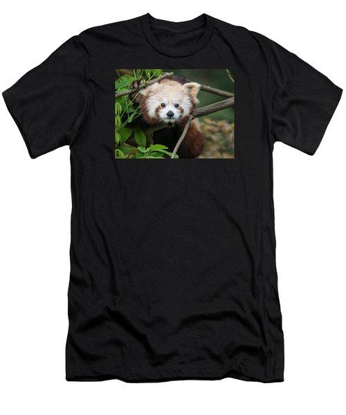 One Intense Critter Men's T-Shirt (Slim Fit) by Greg Nyquist