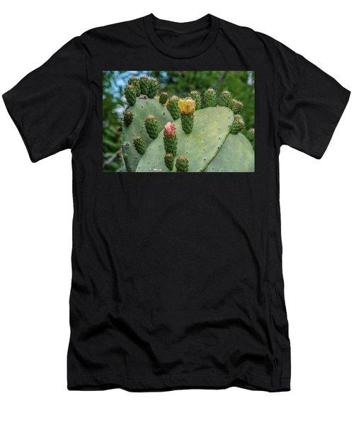 Opuntia Cactus Men's T-Shirt (Slim Fit) by Patrick Boening