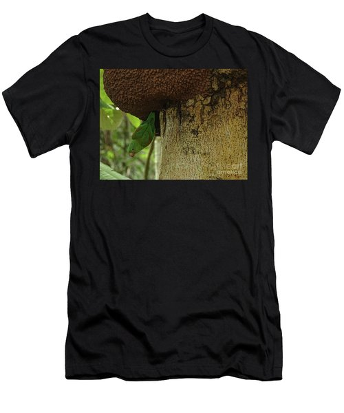 Orange -chinned Parakeet  On A Termite Mound Men's T-Shirt (Athletic Fit)